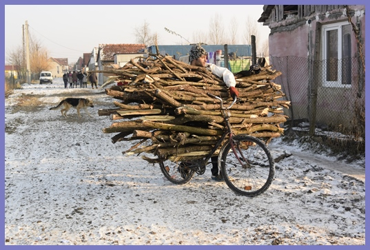 Collecting wood on a bike!