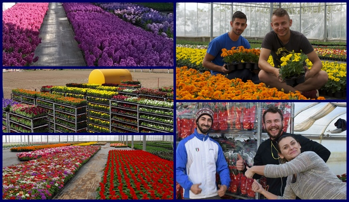 Flowers and the Sminro Team