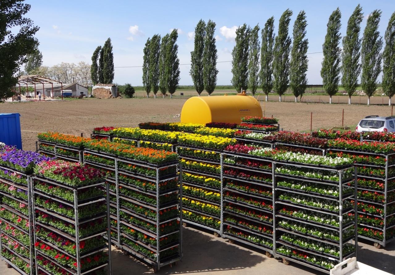 flower trays