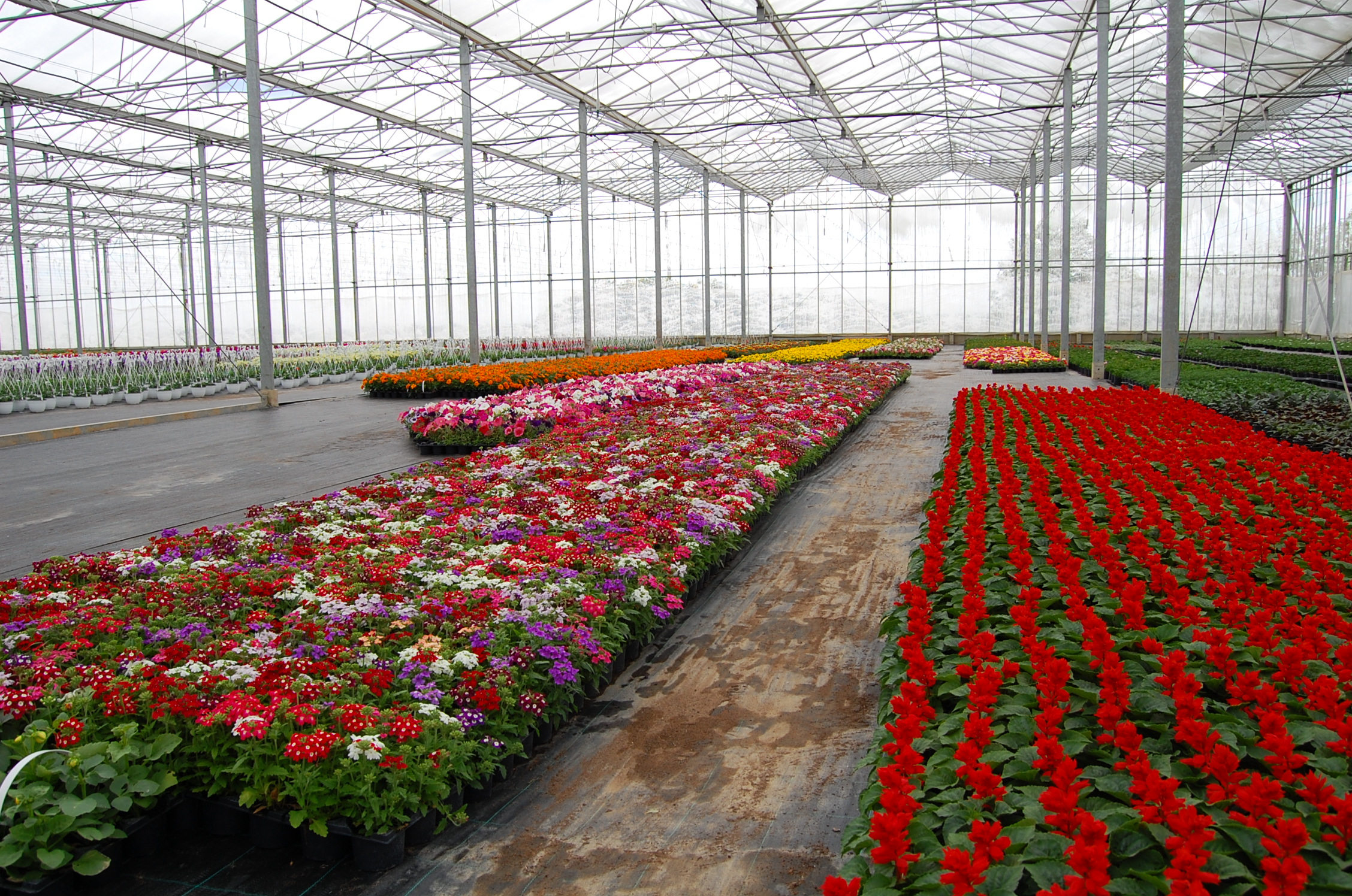 Glasshouse With Flowers